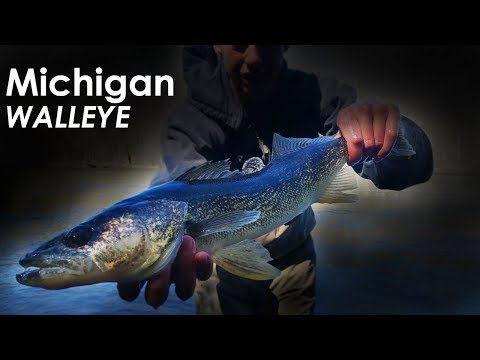 Slaying River Walleye FROM SHORE! - Michigan Walleye Opener