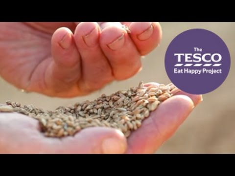 Learn about the Farm to Fork journey of oats and porridge