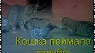 Кошка поймала голубя Мама кошка учит котенка охоте