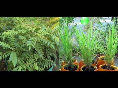 5 Bimë Medicinale Që Duhet Të Mbillni Në Shtëpitë Tuaja