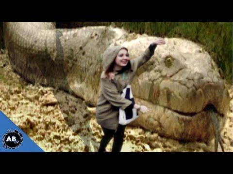 Top 10 Largest Snakes! EP. 428 : SnakeBytesTV : AnimalBytesTV