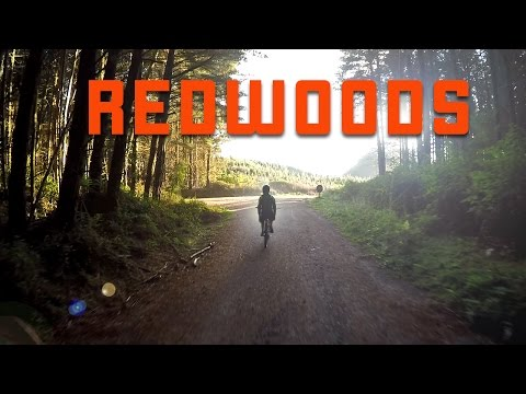 Redwoods Mashup - April 2016