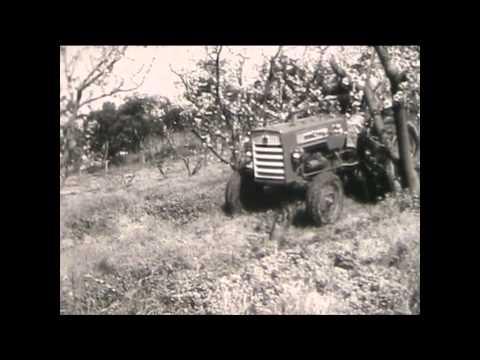 ORANGE FIELD DAYS 1963