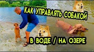 Как контролировать собаку без поводка . Спаниель Сёма на озере. Дрессировка собаки в воде
