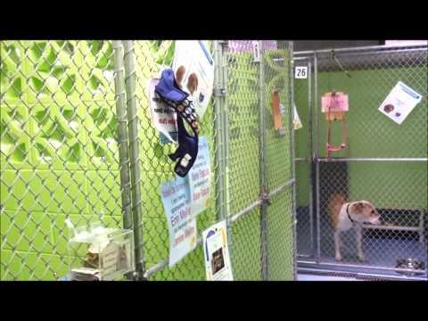 Mt Pleasant Animal Shelter