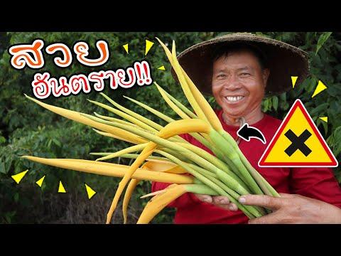 ทำอาหารในป่า ดอกหอมสวยอันตราย กินผิดวิธีอาจถึงชีวิต!! l SAN CE