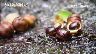 """鳥取県 三朝町では古くから、お正月に栃もちを入れたぜんざいを""""お雑煮""""..."""