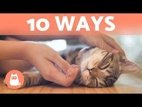 How Do CATS Show AFFECTION? 😽💕 10 Different Ways