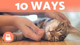 How Do CATS Show AFFECTION?  10 Different Ways