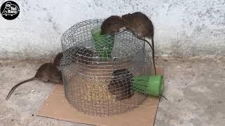 Top 10 Piège à souris   Meilleure idée piège à souris eau 🐭 La souris n'a pas pu s'échapper NEW