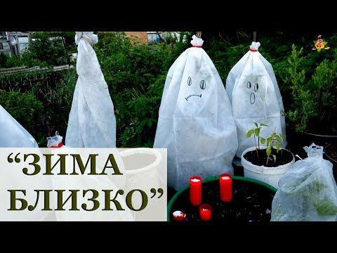 Как спасти огород от заморозков? / Огород в контейнерах