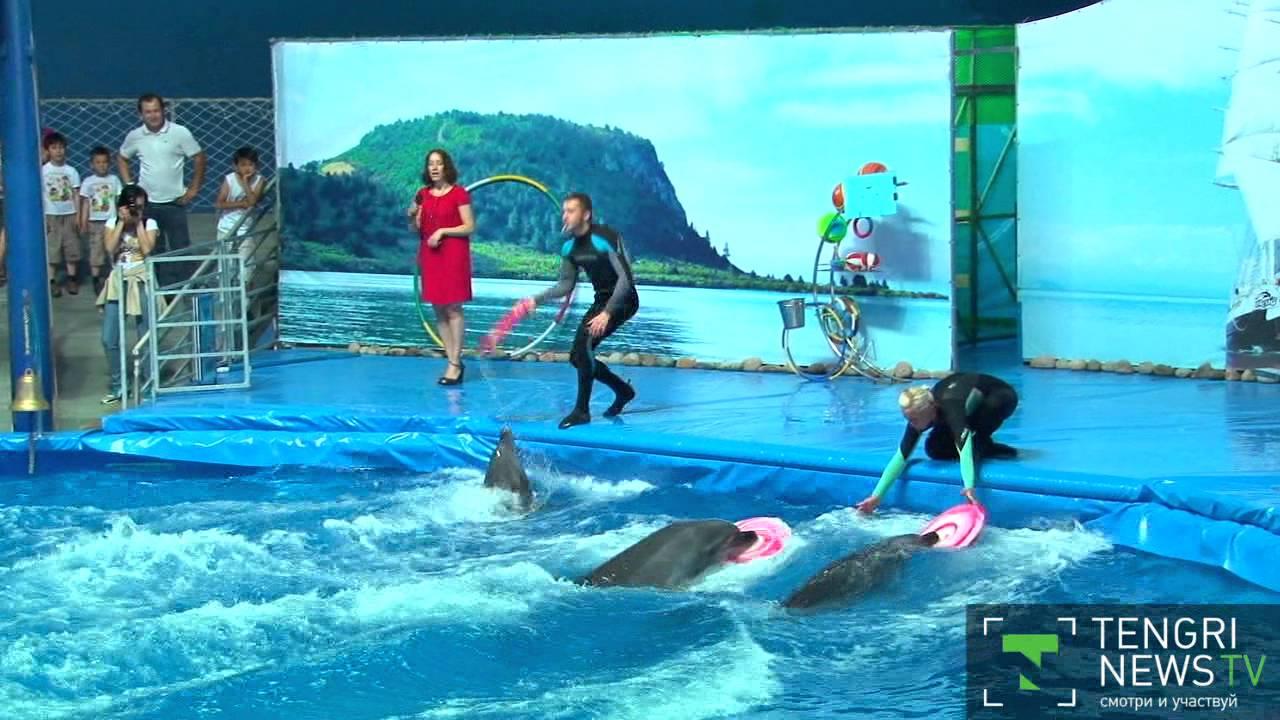 Онлайн дельфин ойыны