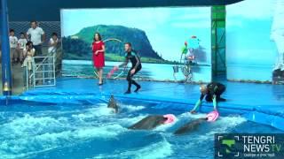 Первый стационарный дельфинарий открылся в Алматы(Дельфинарий заработал в Алматы. Открыла его международная сеть дельфинариев