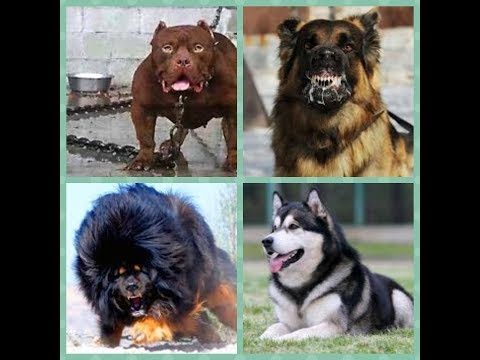 Top 10 Best Dogs Breed In The World