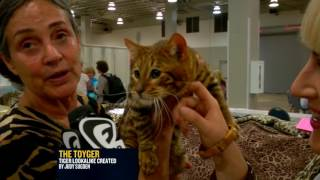 The Toyger, Savannah, and Lykoi and more at the World Cat Congress 2014