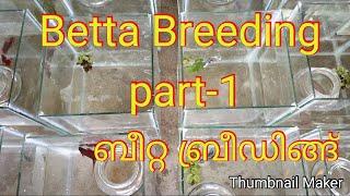 #Betta_breeding_part 1