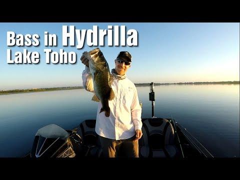 Bass Fishing In Hydrilla At Lake Toho