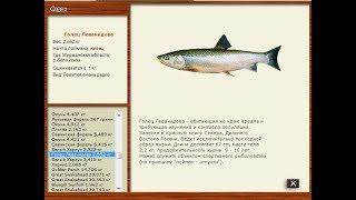 Русская рыбалка 2.4 Мурманская область.Голец Леванидова