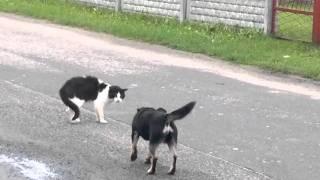 Kot Ktory Nie Boi Sie Psów