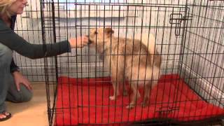 Crate Training Your Dog - Whole Dog Journal