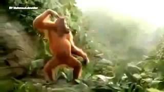 T-killah-как обезьяны в джунглях ПРЕМЬЕРА 2016 ХИТ!!!