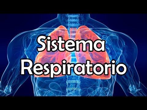 El Sistema Respiratorio (NUEVA VERSIÓN)