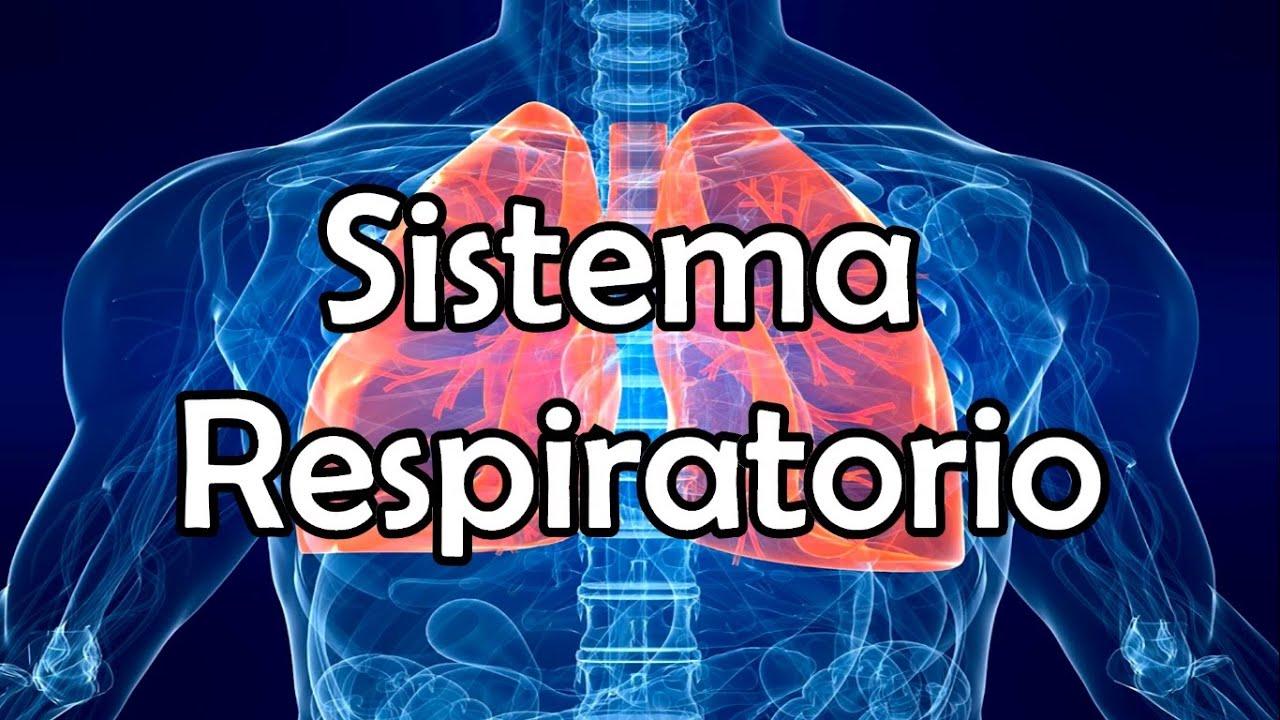 El Sistema Respiratorio (NUEVA VERSIÓN) - YouTube