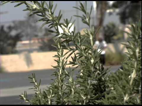 NEW!!! Rey Arista Los Angeles, CA Street Video Part