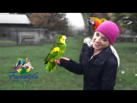 Hilarious Singing with Storm the Amazon Parrot and Jamieleigh