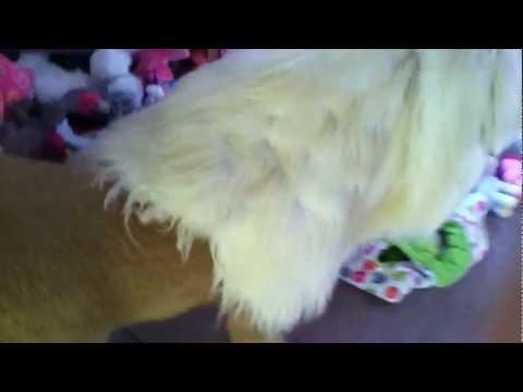 My horse's butthole :)