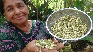 Healthy Village Food ❤ Cooking Sprouted Green Gram Curry in my Village by my Mom