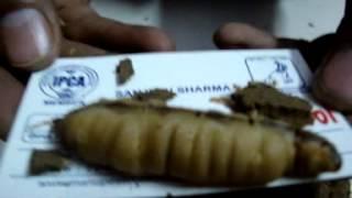 Termite Control In Delhi  91-9811191551