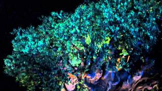 Avatar lights / Lion King stars on Tree of Life during Harambe Nights at Walt Disney World