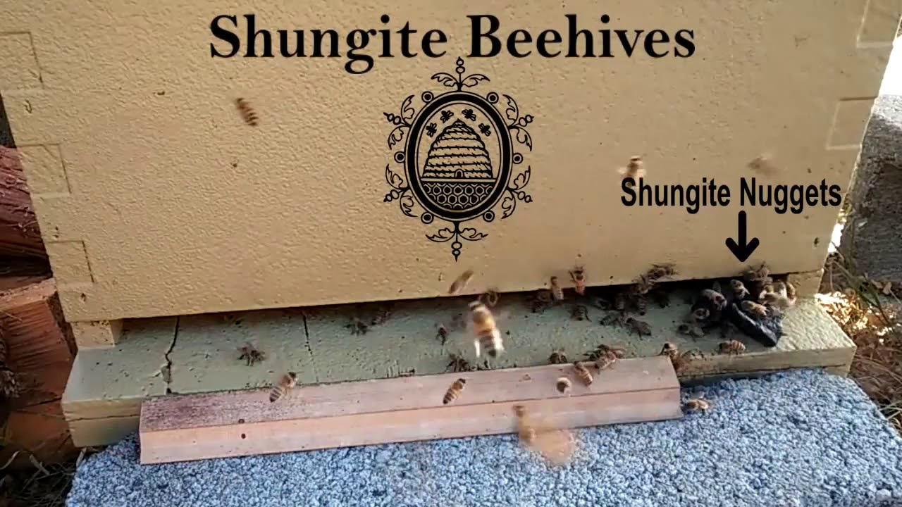 Save All Bees Today! The Miracle Mineral Shungite | Indiegogo