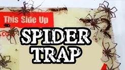 Spider Trap!!!