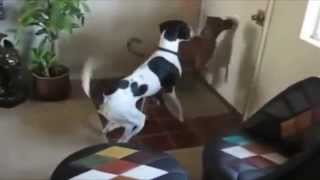 Смешные собаки и лазерная указка, видео подборка 2014 NEW