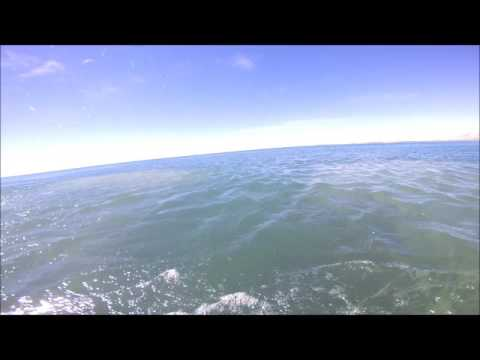 Cray Diving Cape Campbell 2017