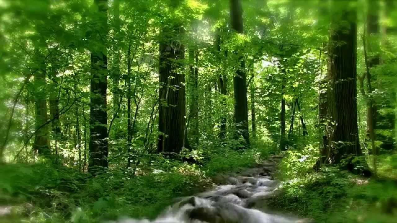 Анимационная картинка лес