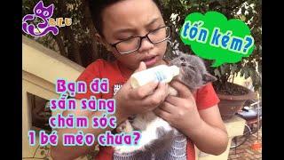 Cần chuẩn bị những gì để chăm sóc một bé mèo anh lông ngắn