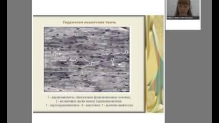 видео Мышечная система