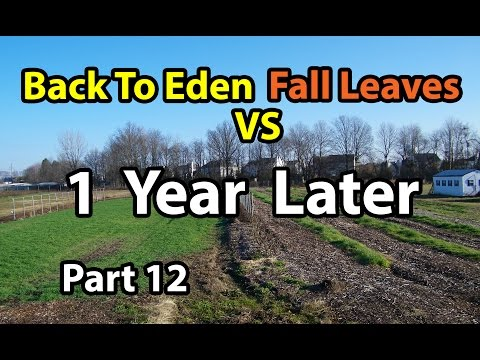 Back to Eden Organic Gardening Method 101 with Wood Chips vs Leaves Composting G. Series # 12