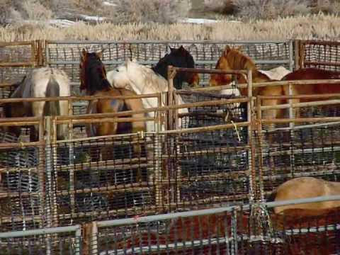 Calico Roundup Overnight Horses