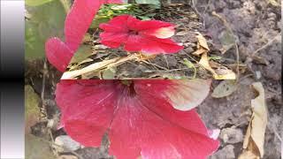 Цветы  в октябре и ноябре
