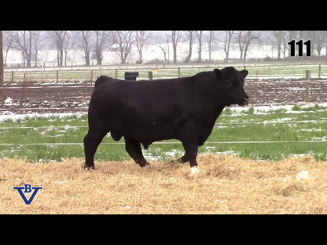 Branch View Angus Lot 111