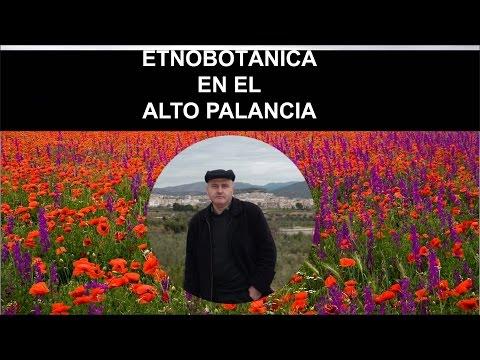 Jornada Botánica en homenaje a Carlos Pau Español  Etnobotánica  en El Alto Palancia 2ª parte