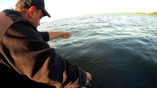 Снятие нерестового запрета Ловим густеру на кольцо Рыбалка на Волге 01 07 2021 г