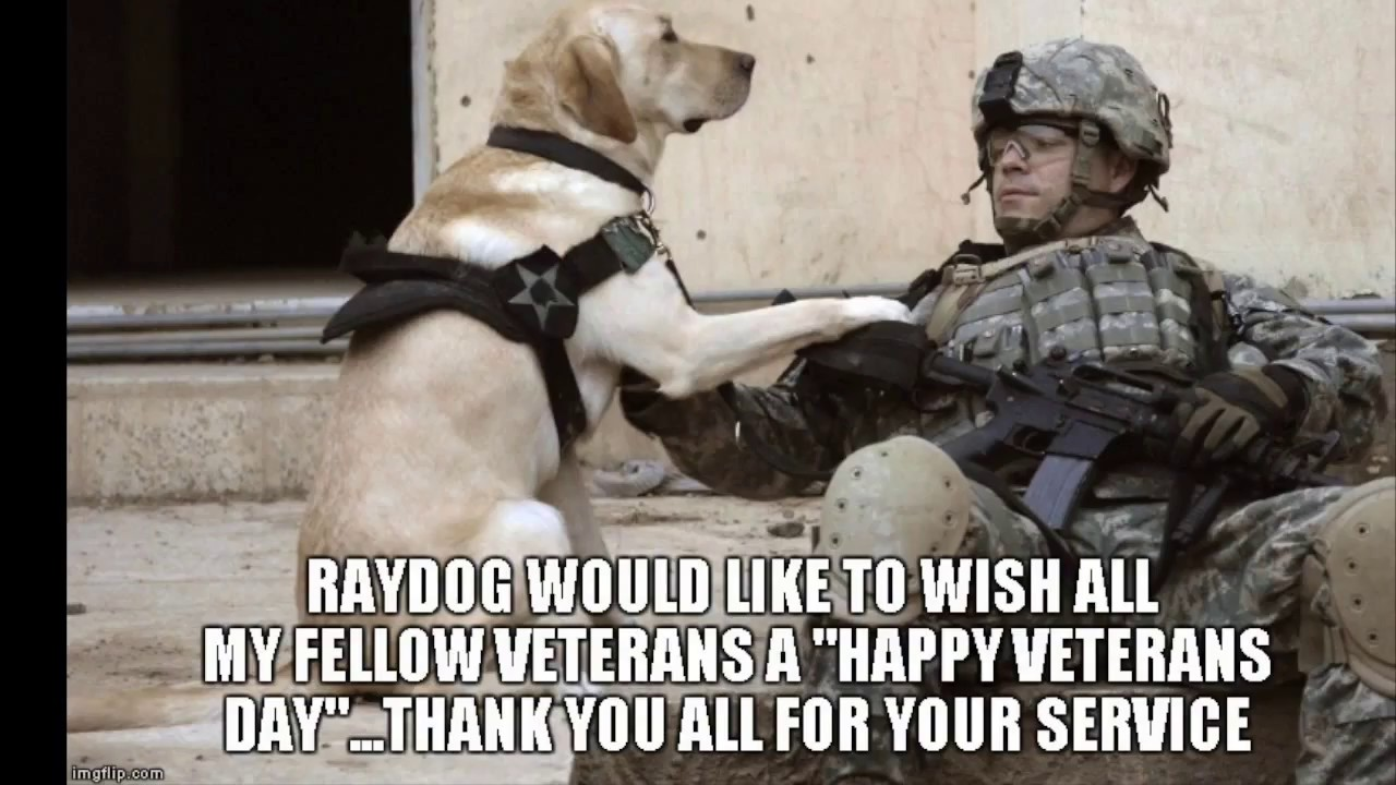Funny Memes For Veterans : Funny military memes veterans day special hamster care sheet
