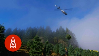 Harvesting One Million Christmas Trees by Helicopter