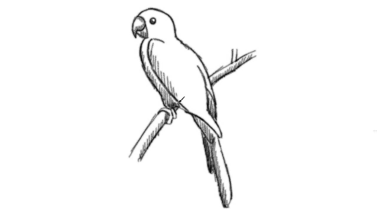 how to draw a parrot drawing cartoon illustration line art shading
