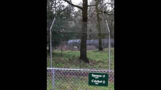 Wolf Haven International Tour - all the wolves howling!